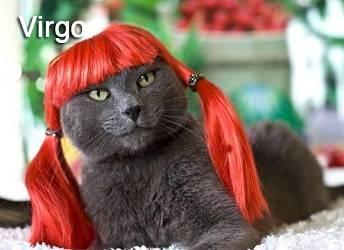 gato virgo