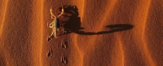 escorpión en el desierto